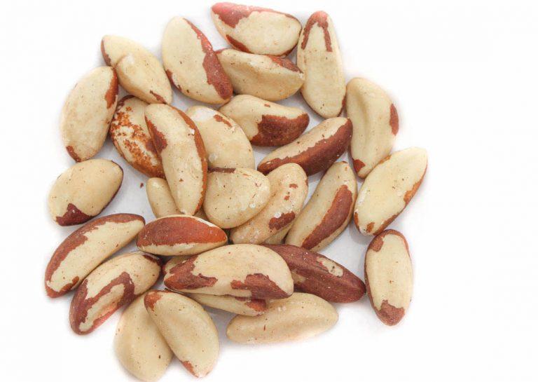 brazil-nut